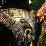 The Masaya Volcano's amazing butterflies