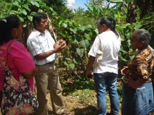 Discussing methods of fruit production