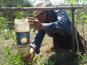 Using plastic bottles to irrigate seedlings