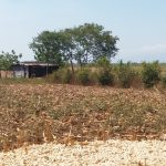 The water tank for the Agrosolar project, orange trees and (in the foreground) remains of a maize crop